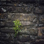 A wall with a small plant growing from a crack