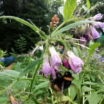 A bumblebee on flowers