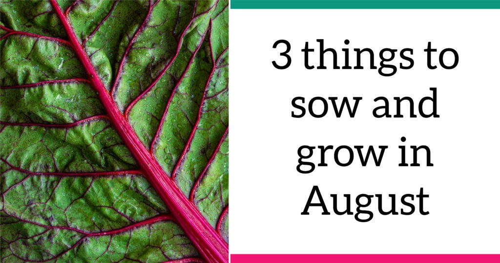A closeup of red chard. Text reads: Three things to sow and grow in August